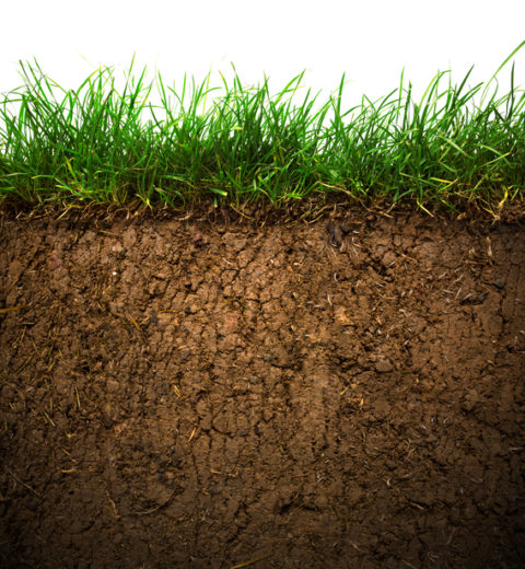 Grass and soil amendments
